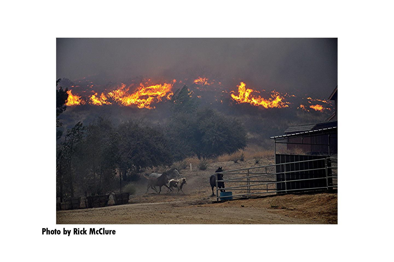 Horses run as flames roar behind them