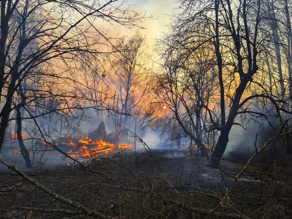 Forest fire in Ukraine