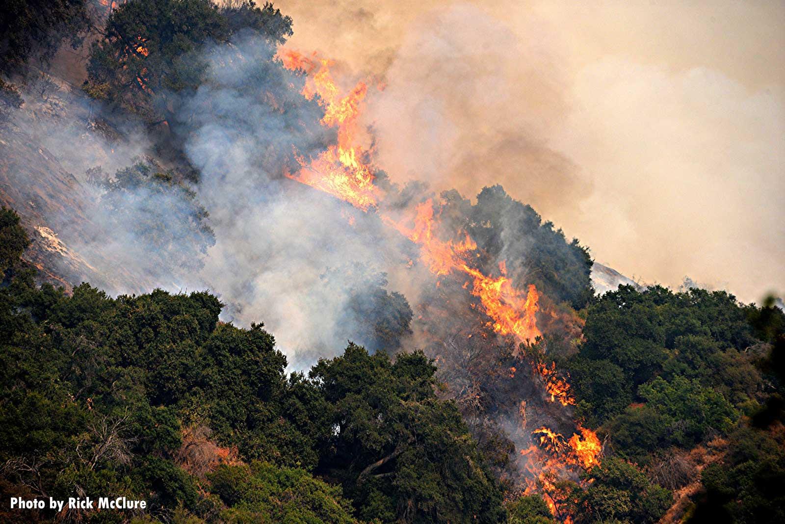 Flames roaring through vegetation during the Bobcat Fire