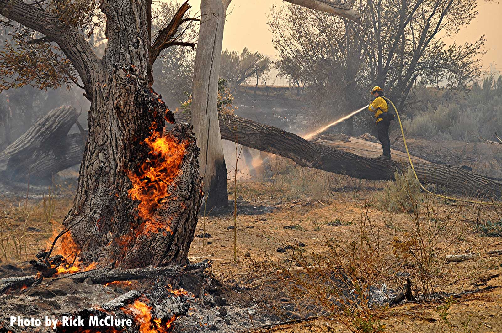 Fire burns through a tree with a firefighter and a hoseline in the background