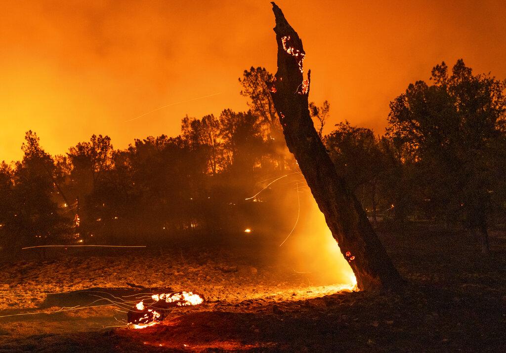 A tree smolders next to Platina Roa