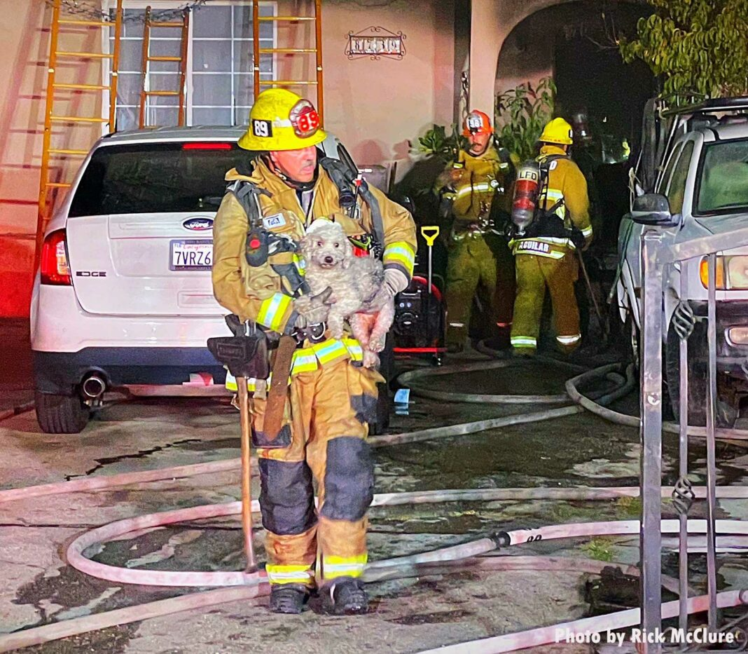 Firefighter removing a dog from a structure fire