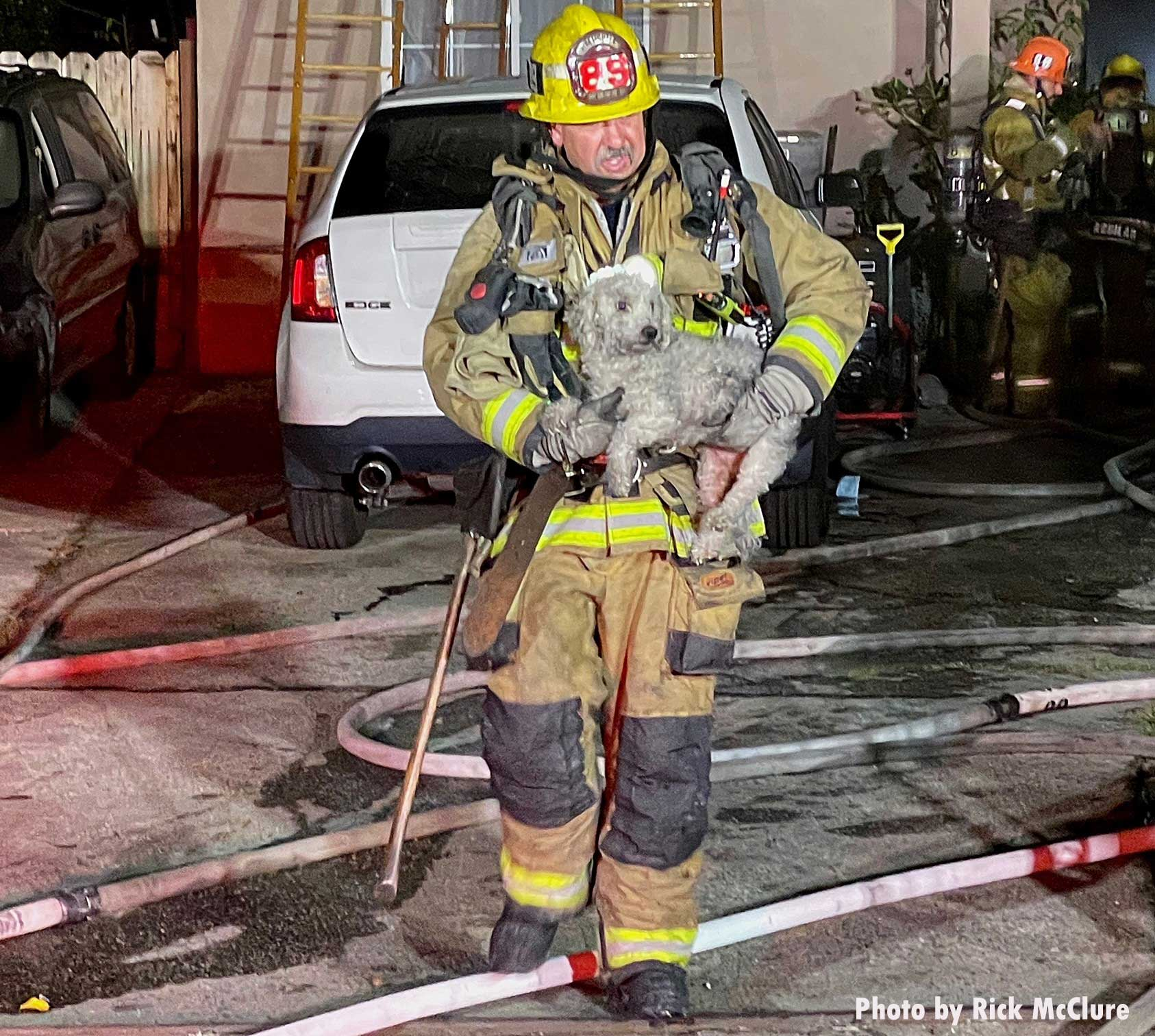 LAFD firefighter carrying a rescued dog