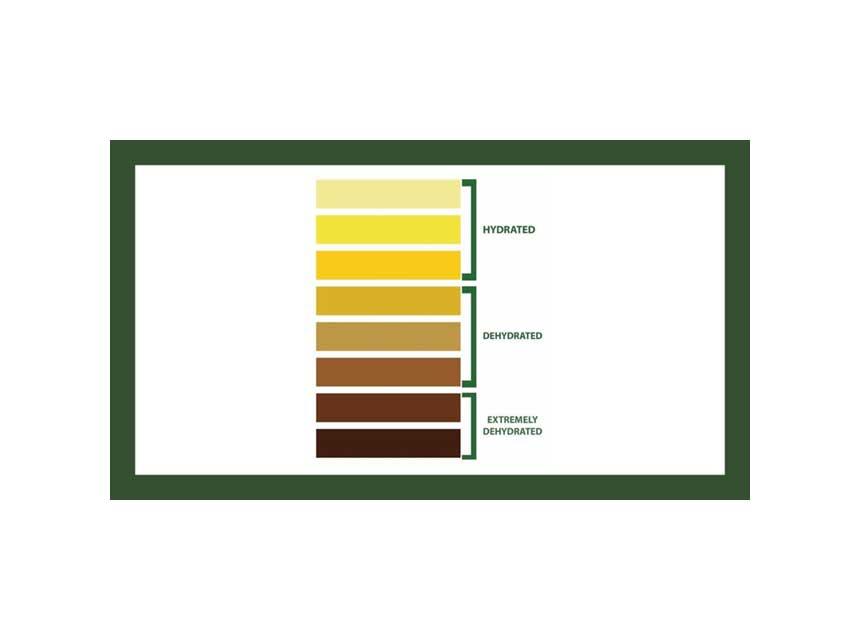Firefighter dehydration chart