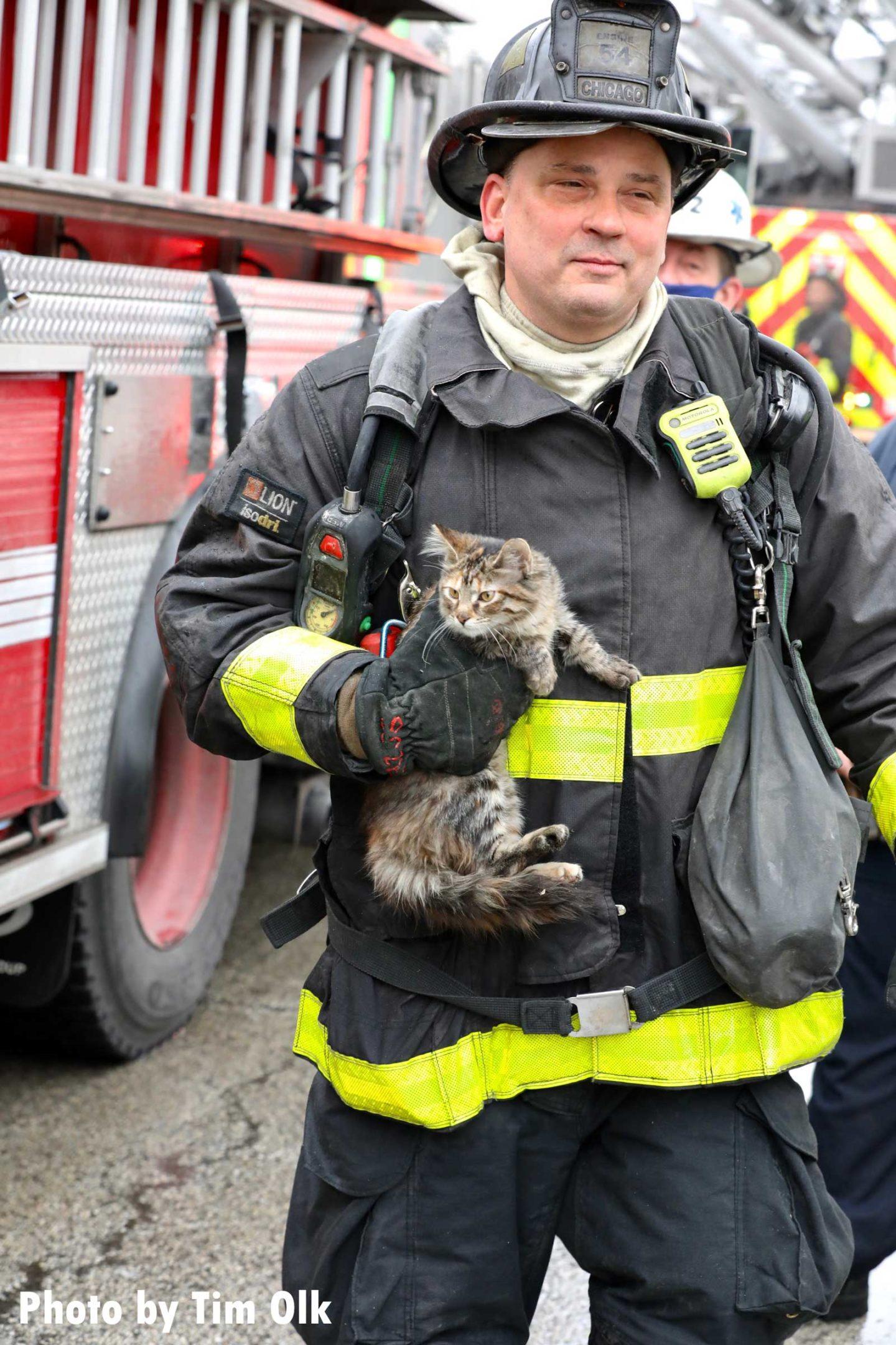 Chicago firefighter holding a kitten