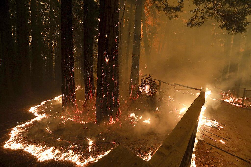 Wind-fanned wildfire