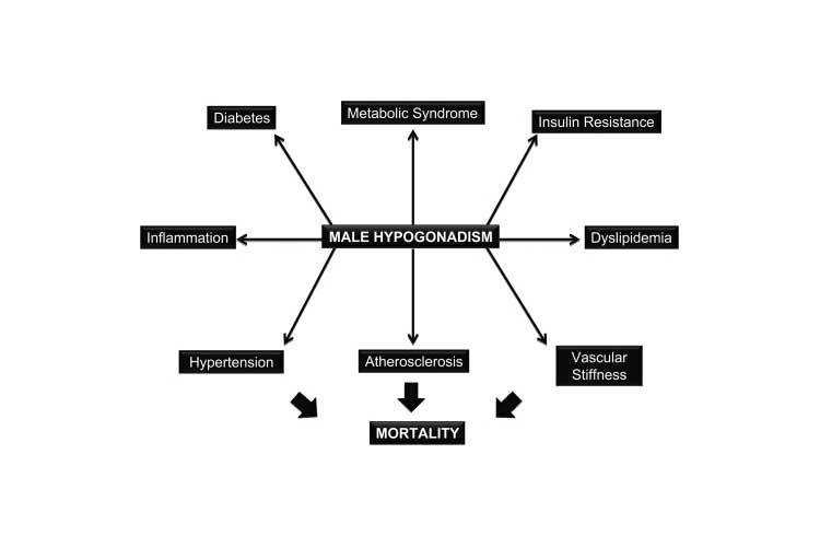 Testosterone schema from NIH