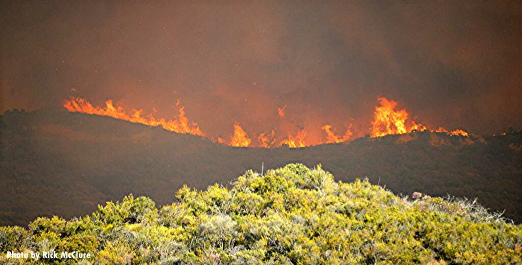 Line of fire across a hillside during the Palisades Fire in California